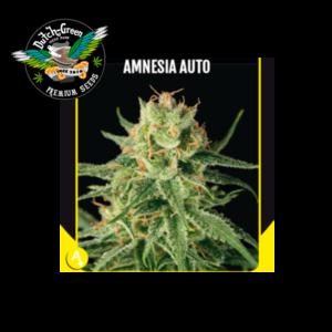 Amnesia Haze Auto Dutch Green Seeds