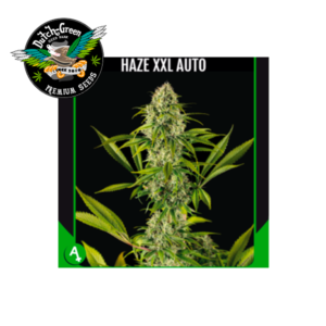 Haze XXL Auto Dutch Green Seeds