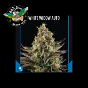 White widow auto dutch green seeds