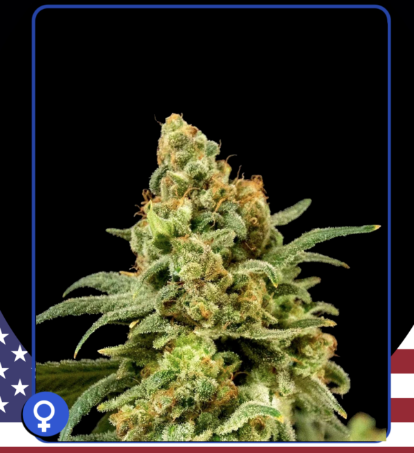 DG Girl Scout Cookie