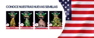 DG USA Semillas