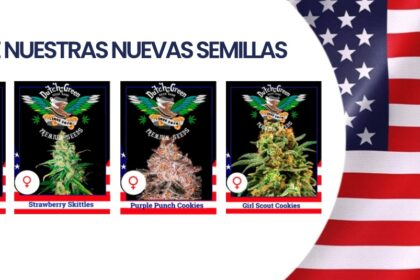Nuevas Semillas DG Seeds USA