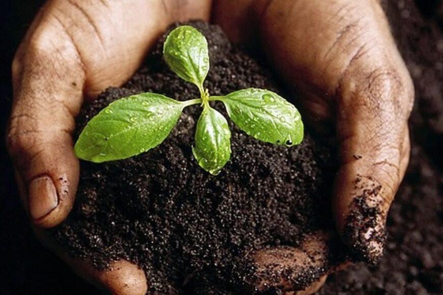 Abonos orgánicos y minerales